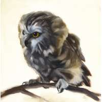 In the Dreamtime (Saw Whet Owl)